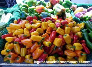 Laguna Beach Farmers Market JR Organics bell peppers