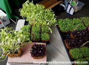 herbs and spices laguna beach farmers market farms for good microgreens
