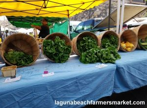 organic vegetables laguna beach farmers market bluebird canyon farms